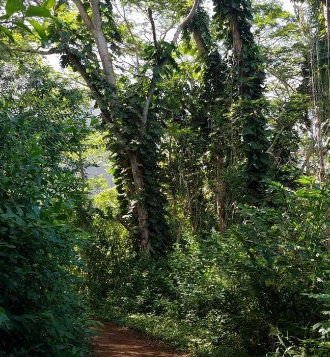 Likeke Trail