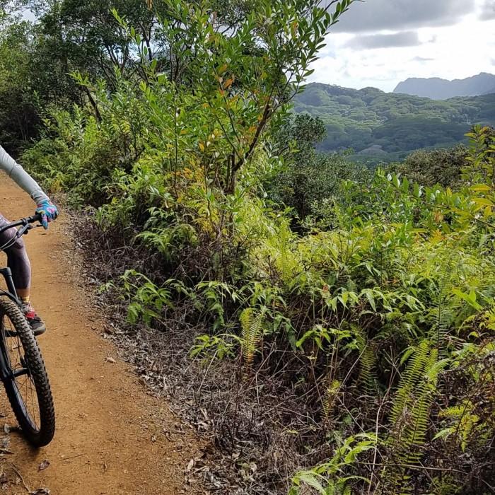 Maunawili Views
