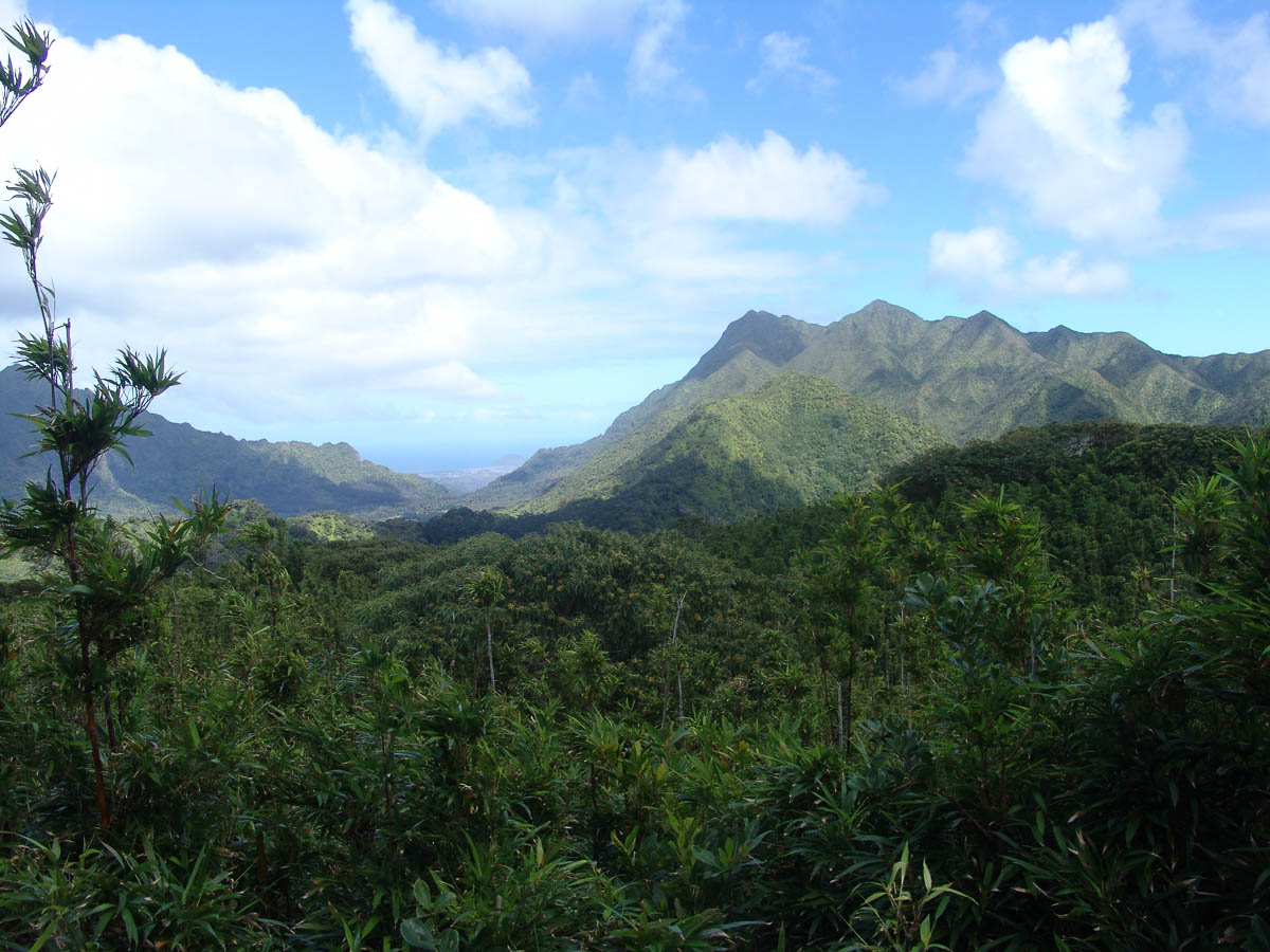 Volcanic Rainforest Hike Bike Hawaii