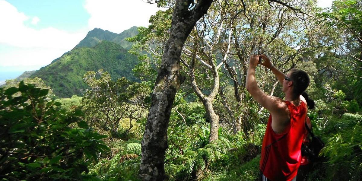 Hawaii-rainforest-hike-4