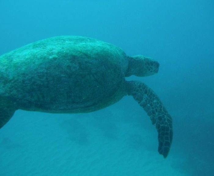 Hawaii-waikiki-snorkel-sail-10