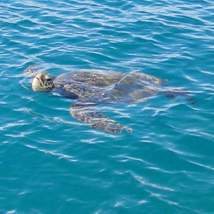 Hawaii-waikiki-snorkel-sail-2