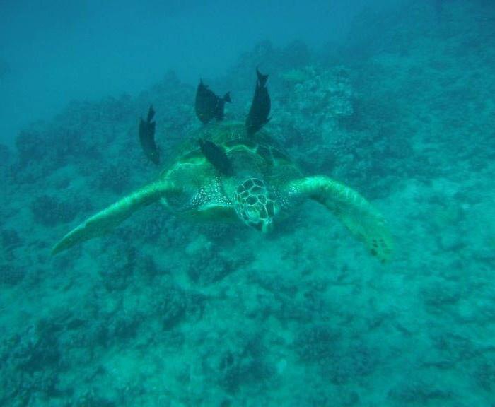 Hawaii-waikiki-snorkel-sail-9