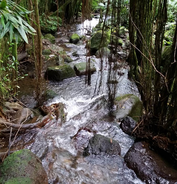 Hawaii-waterfall-hike-13